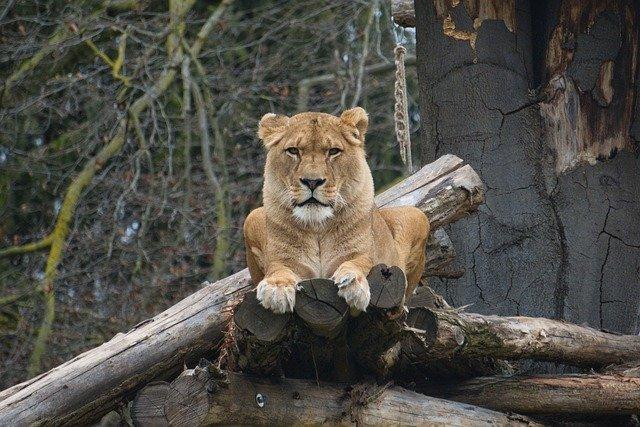 ラグナン動物園の主な動物をご紹介