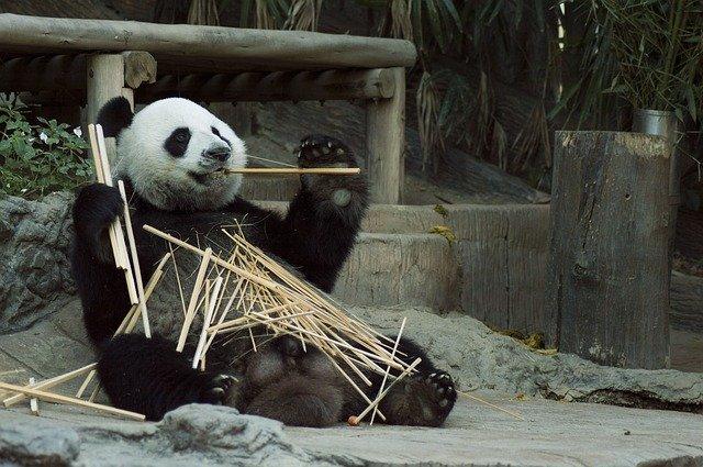 ジャカルタのラグナン動物園をご紹介!【おすすめ動物15選あり】