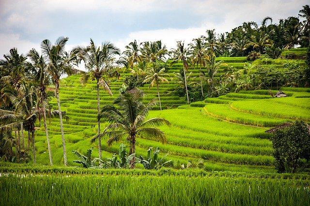 インドネシアの文化遺産